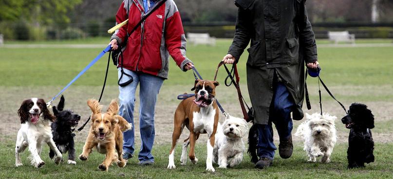 dogwalkers