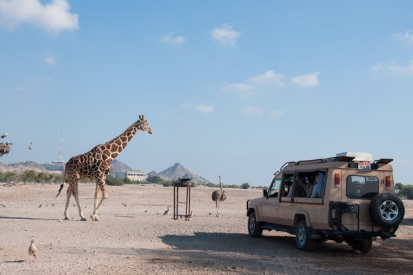 Sir Bani Yas Safari Island