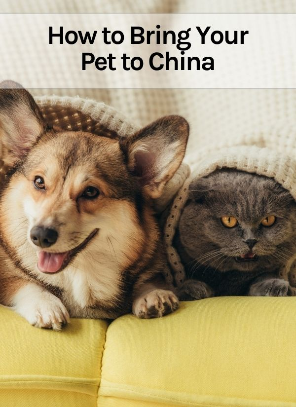 How to Bring Your Pet to China Thumbnail